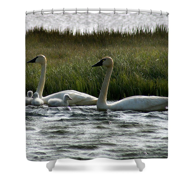 Swans Shower Curtain featuring the photograph Tundra Swans And Cygents by Anthony Jones