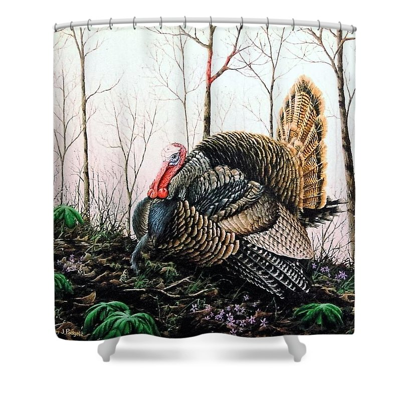 Turkey Shower Curtain featuring the painting In Strut - Turkey by Anthony J Padgett