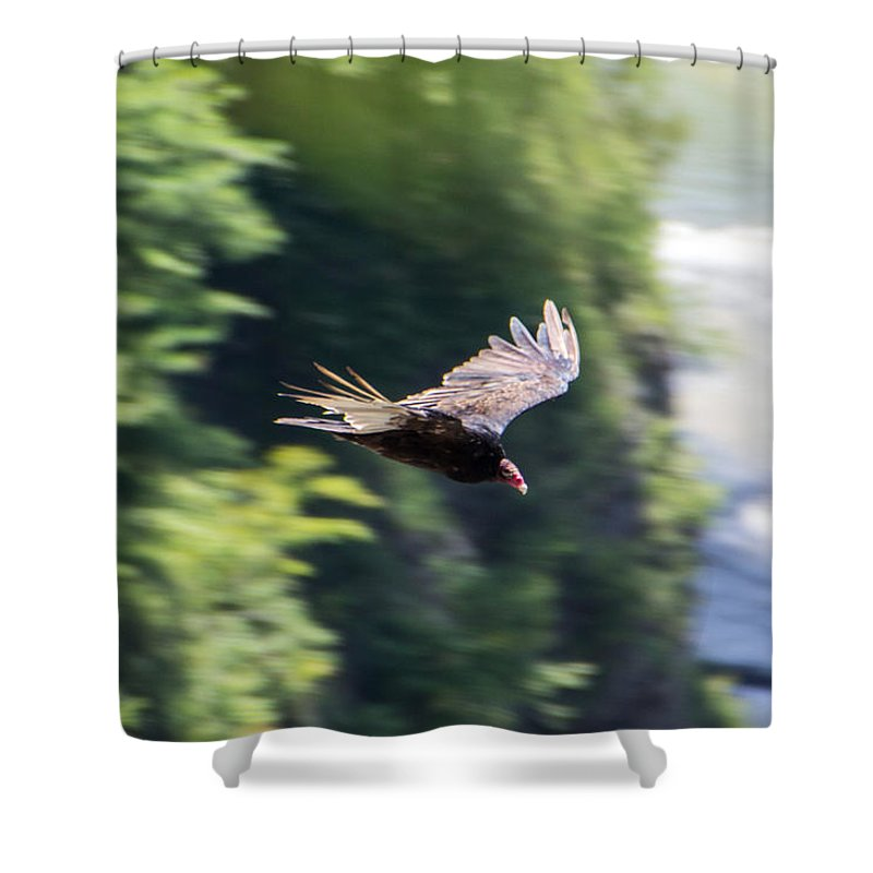 Turkey Vulture Shower Curtain featuring the photograph Turkey Vulture by Kristian Jensen