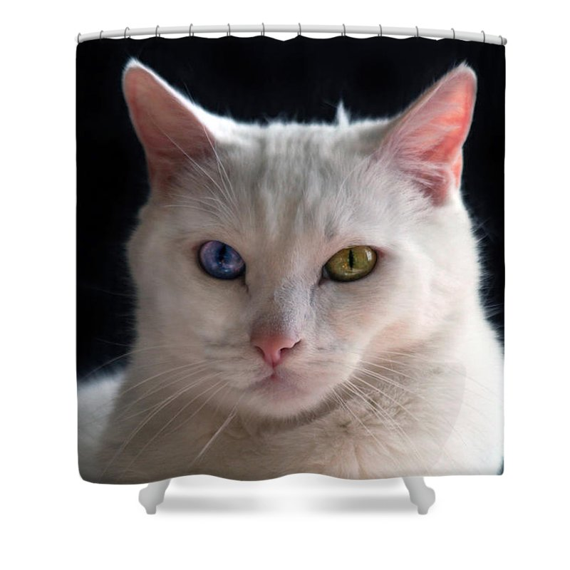 aab70bc6bd8d28 Turkish Angora Shower Curtain featuring the photograph Turkish Angora Cat  With Odd Eyes by Catherine Sherman