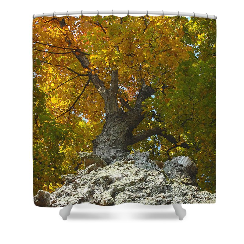 Fall Shower Curtain featuring the photograph Turning Colors by David Lee Thompson