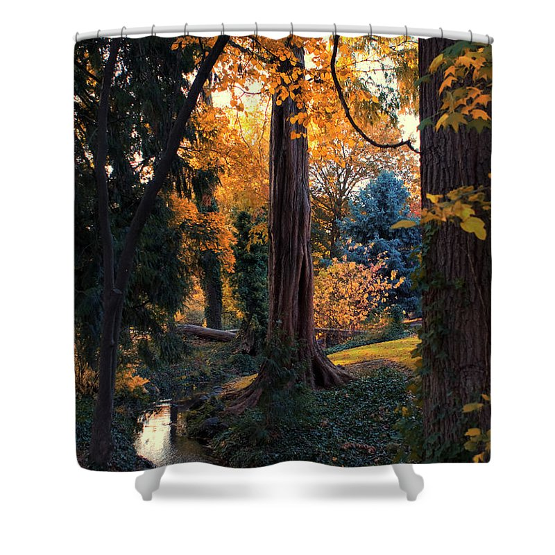 Tree Shower Curtain featuring the photograph Turning Of The Leaves by Karen Goodwin