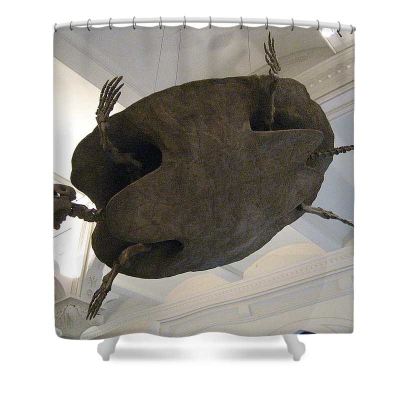 Turtle Shower Curtain featuring the photograph Turtle by Brian McDunn