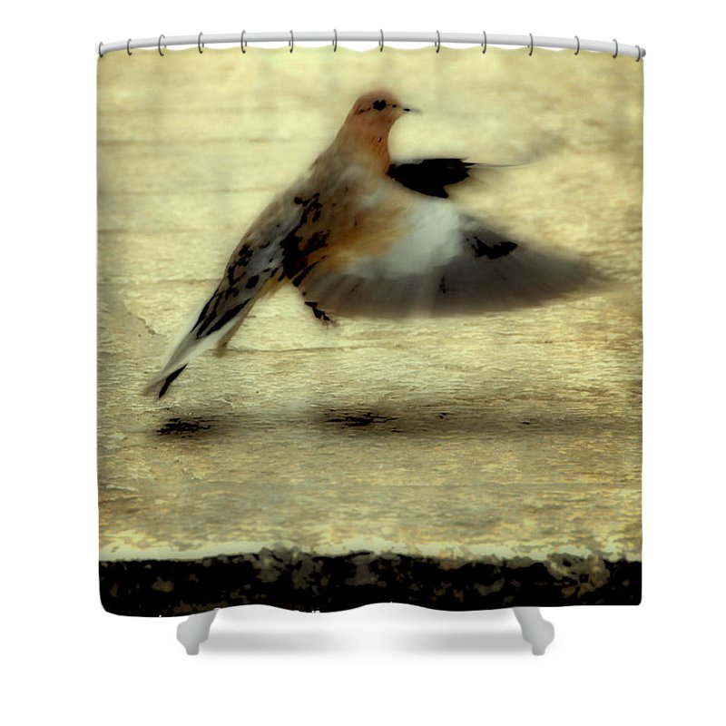 Jewish Shower Curtain featuring the photograph Turtle Dove by Deb Cohen