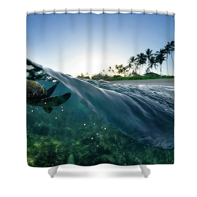 Split Level Shower Curtain Featuring The Photograph Turtle By Sean Davey