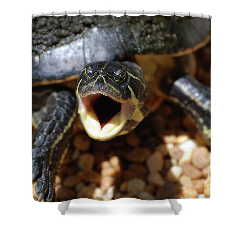 Turtle Shower Curtain featuring the photograph Turtle With His Mouth Wide Open by DejaVu Designs