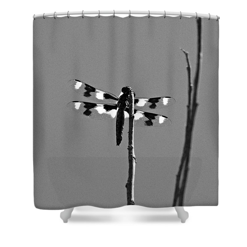 Dragonfly Shower Curtain featuring the photograph Twelve-spot Skimmer Dragonfly-bw by Katherine Nutt