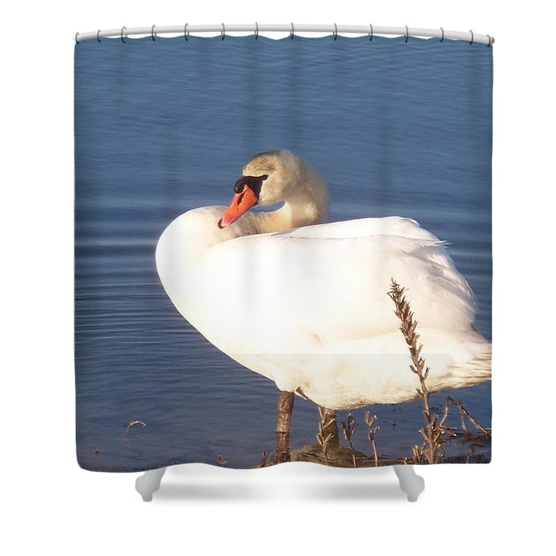 Twisted Shower Curtain featuring the painting Twisted White Swan by Eric Schiabor