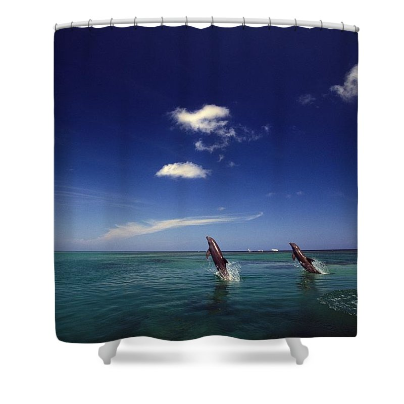 Outdoors Shower Curtain featuring the photograph Two Bottlenose Dolphins Dancing Across by Natural Selection Craig Tuttle