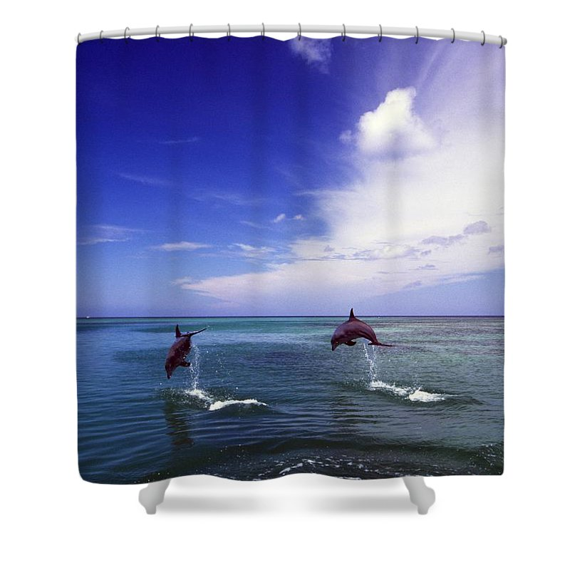Outdoors Shower Curtain featuring the photograph Two Bottlenose Dolphins by Natural Selection Craig Tuttle