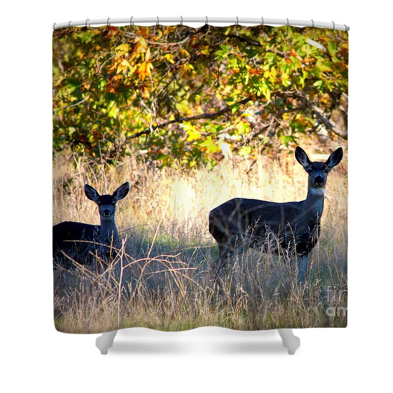 Animal Shower Curtain featuring the photograph Two Deer In Autumn Meadow by Carol Groenen