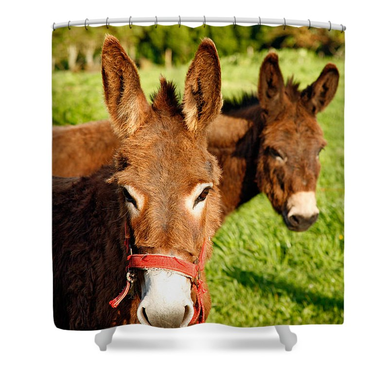 Animals Shower Curtain featuring the photograph Two Donkeys by Gaspar Avila