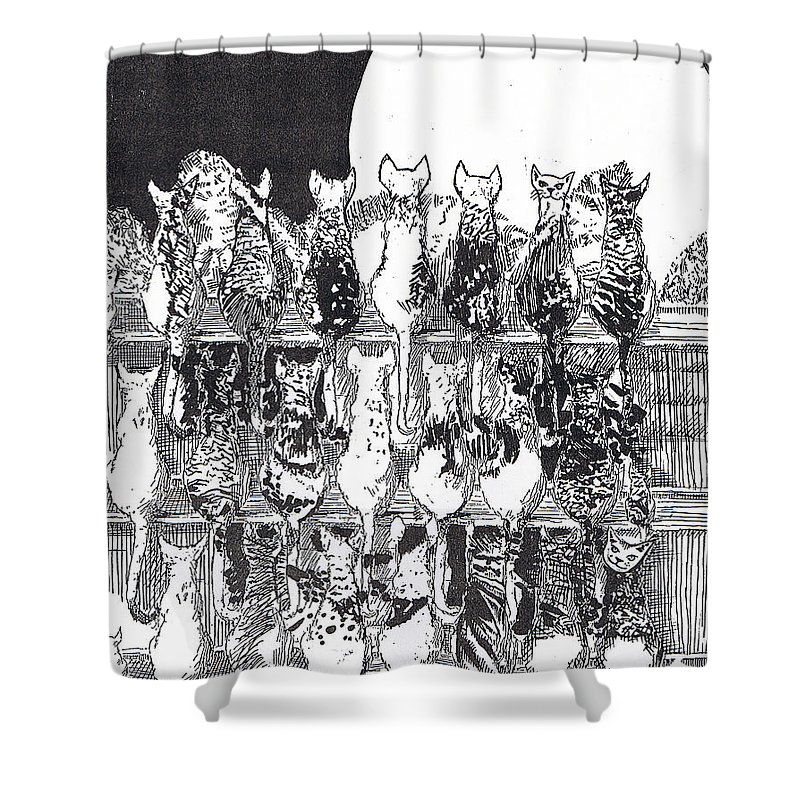 Cats Shower Curtain featuring the drawing Two Dozen And One Cats by Seth Weaver