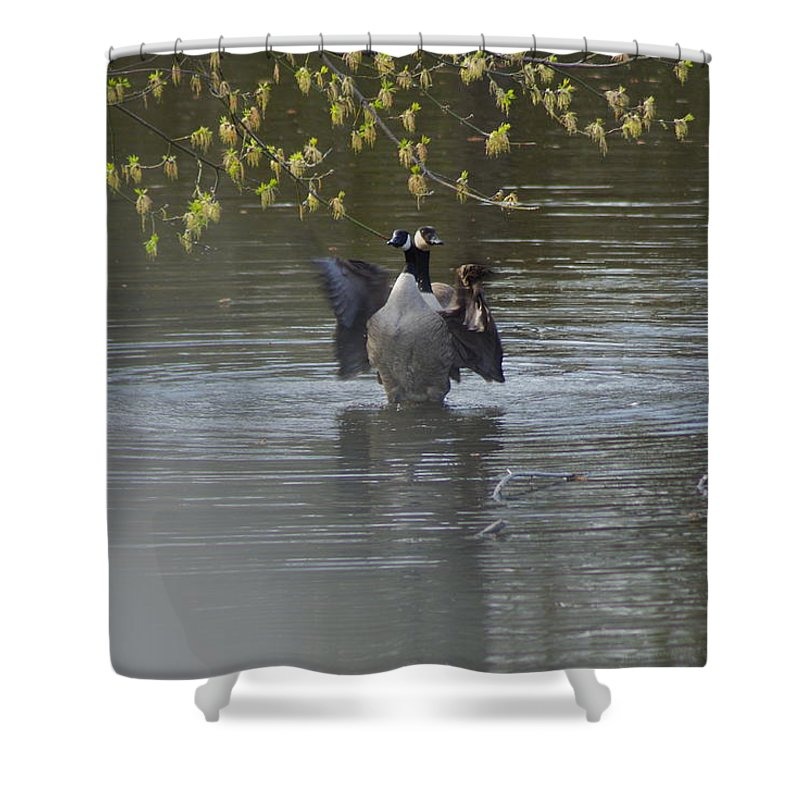 Geese Shower Curtain featuring the photograph Two Geese On A Pond by Alice Markham