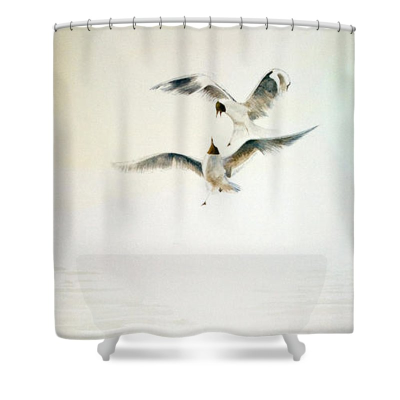 Seagulls Shower Curtain featuring the painting Two Gulls by Alan Pickersgill