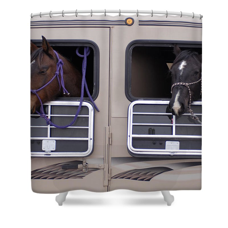 Nobody Shower Curtain featuring the photograph Two Horses Are Ready To Travel by Joel Sartore