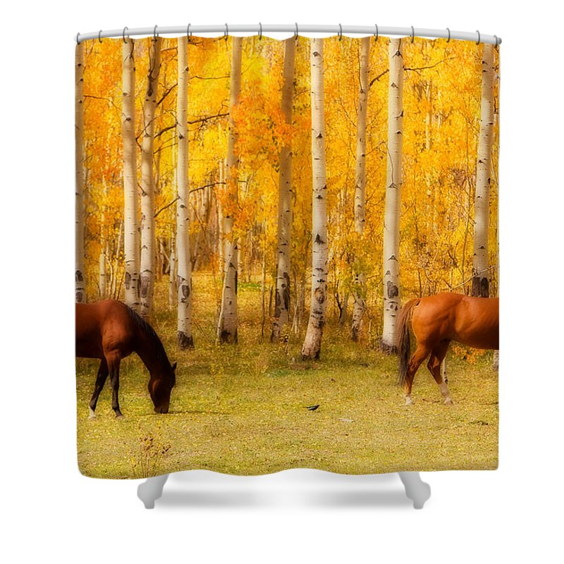 Autumn Shower Curtain featuring the photograph Two Horses In The Colorado Fall Foliage by James BO Insogna