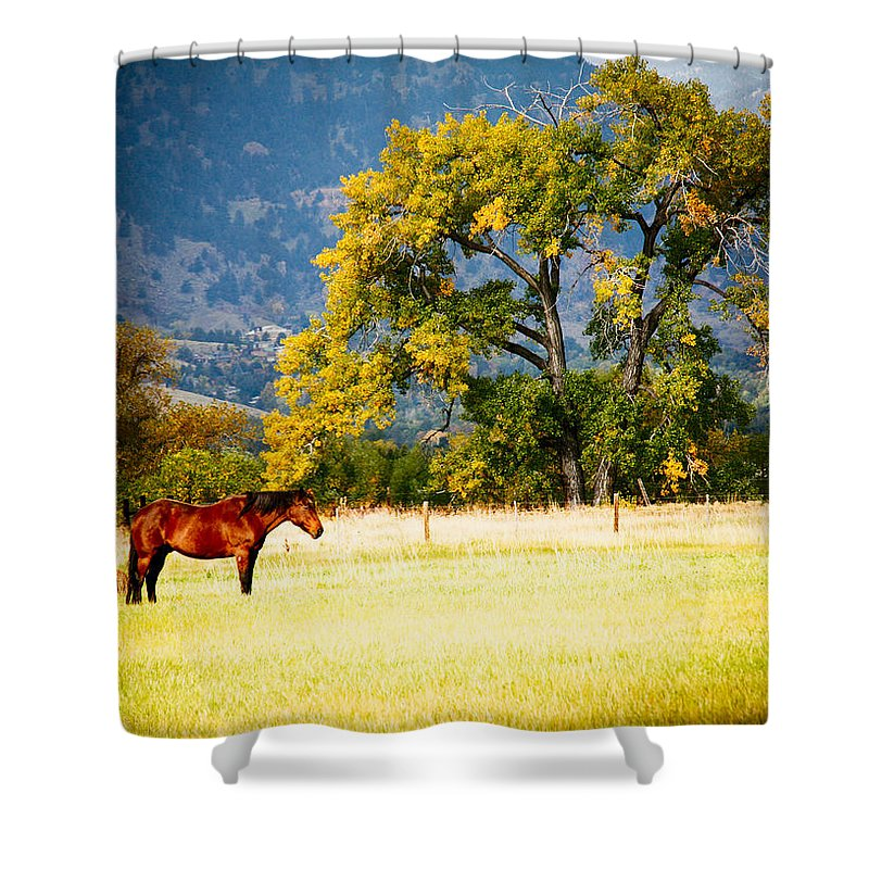 Animal Shower Curtain featuring the photograph Two Horses by Marilyn Hunt