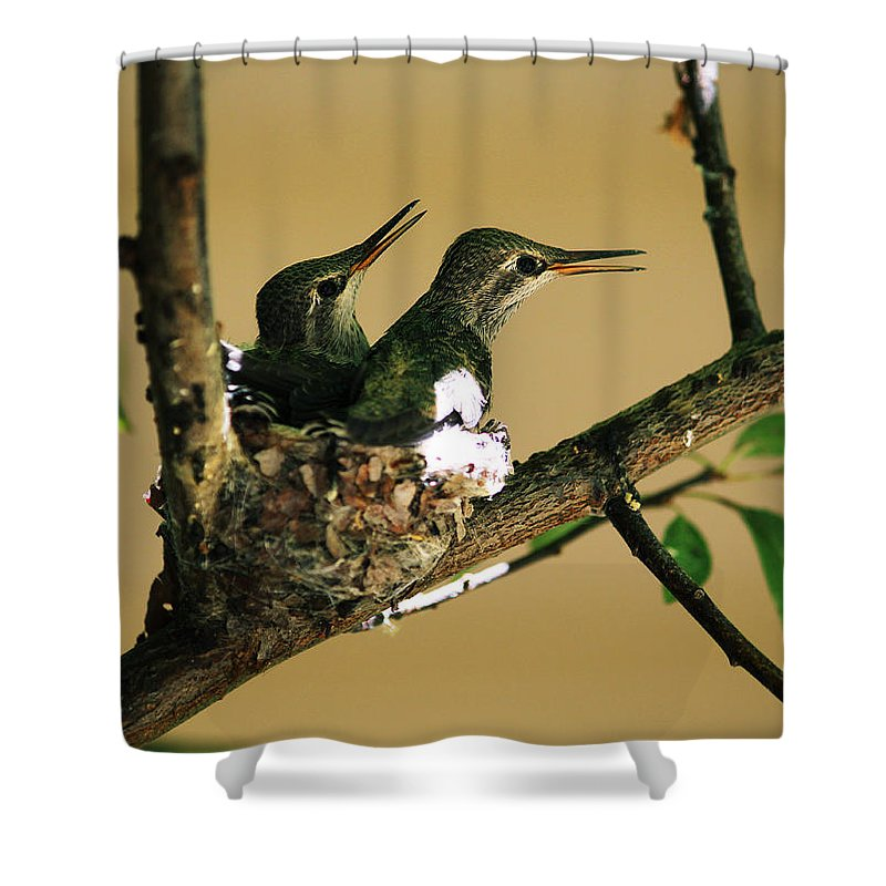 Hummingbirds Shower Curtain featuring the photograph Two Hummingbird Babies In A Nest 5 by Xueling Zou