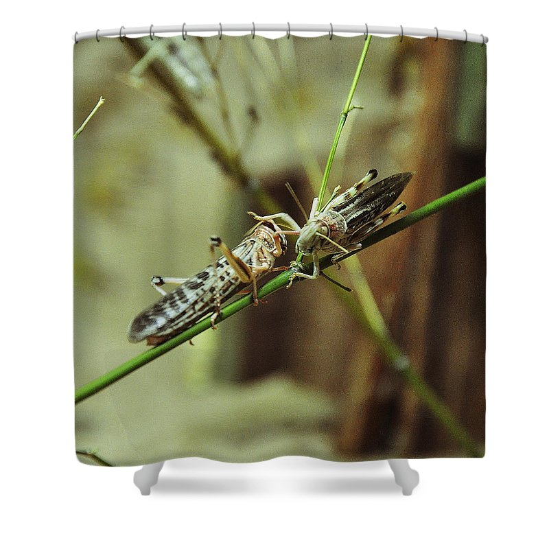 Locusts Shower Curtain featuring the photograph Two Locusts by Caroline Reyes-Loughrey
