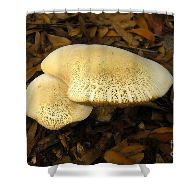 Mushrooms Shower Curtain featuring the photograph Two Mushrooms by David Lee Thompson