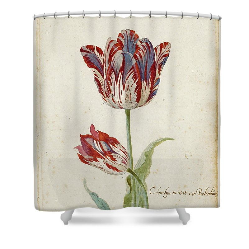 Jacob Marrel Shower Curtain featuring the drawing Two Red And White Tulips. Colombijn And Wit Van Poelenburg by Jacob Marrel