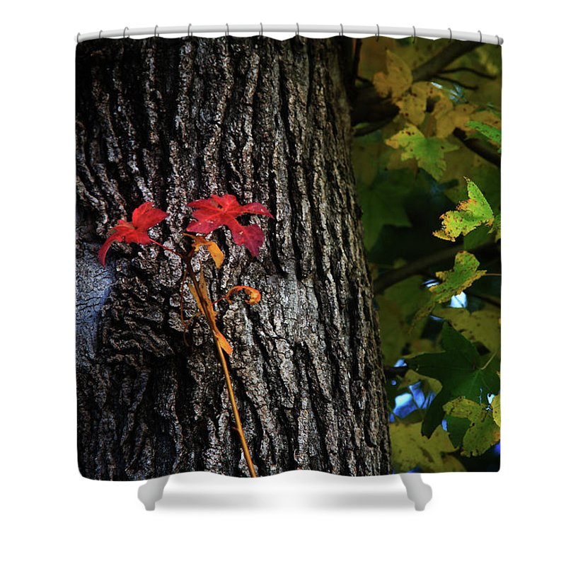 Nature Shower Curtain featuring the photograph Two Red Leaves by Toni Hopper