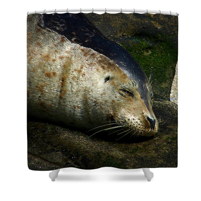 Seal Shower Curtain featuring the photograph Two Tone Seal by Anthony Jones