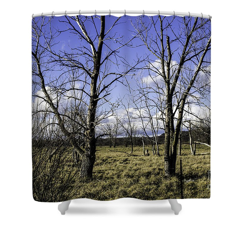 Blue Shower Curtain featuring the photograph Two Trees Of Blue by Doug Daniels