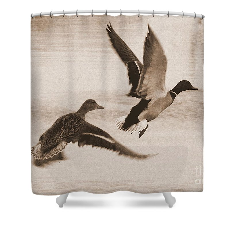 Ducks Shower Curtain featuring the photograph Two Winter Ducks In Flight by Carol Groenen