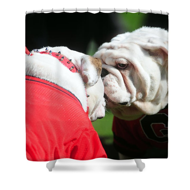 Athens Shower Curtain Featuring The Photograph Uga Viii And Russ By Kelly  Wegel