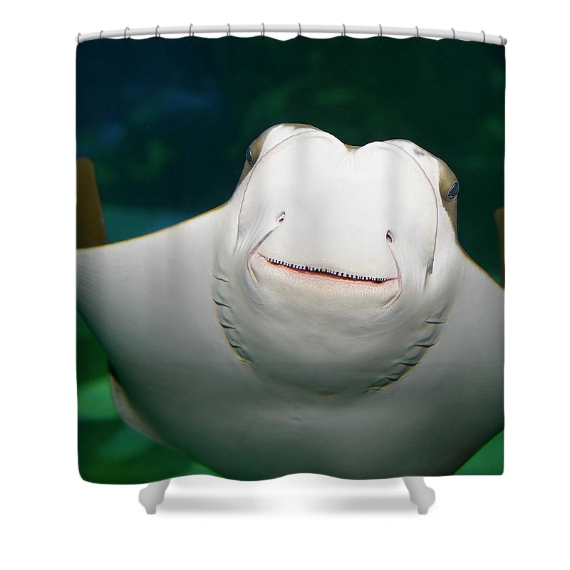 Southern Shower Curtain Featuring The Photograph Underside And Face Of A Smiling Stingray In An Aquarium