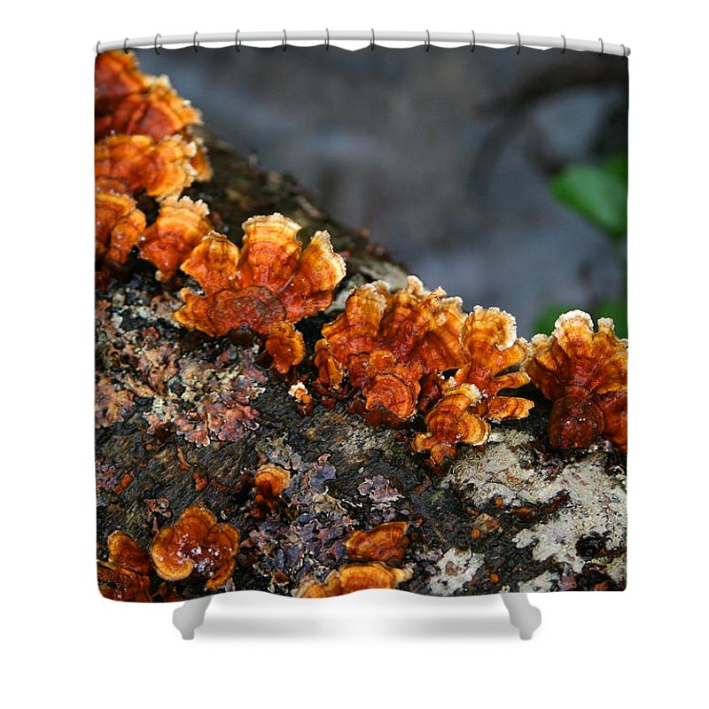 Bright Orange Nature Wet Forest Fungus Tree Wood Closeup Macro Shower Curtain featuring the photograph Unexpected Brightness by Andrei Shliakhau