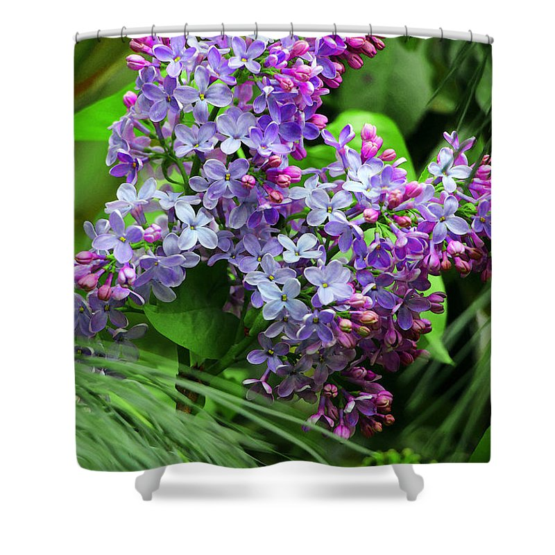 Syringa Vulgaris Shower Curtain featuring the photograph Unforgettable by Iryna Goodall