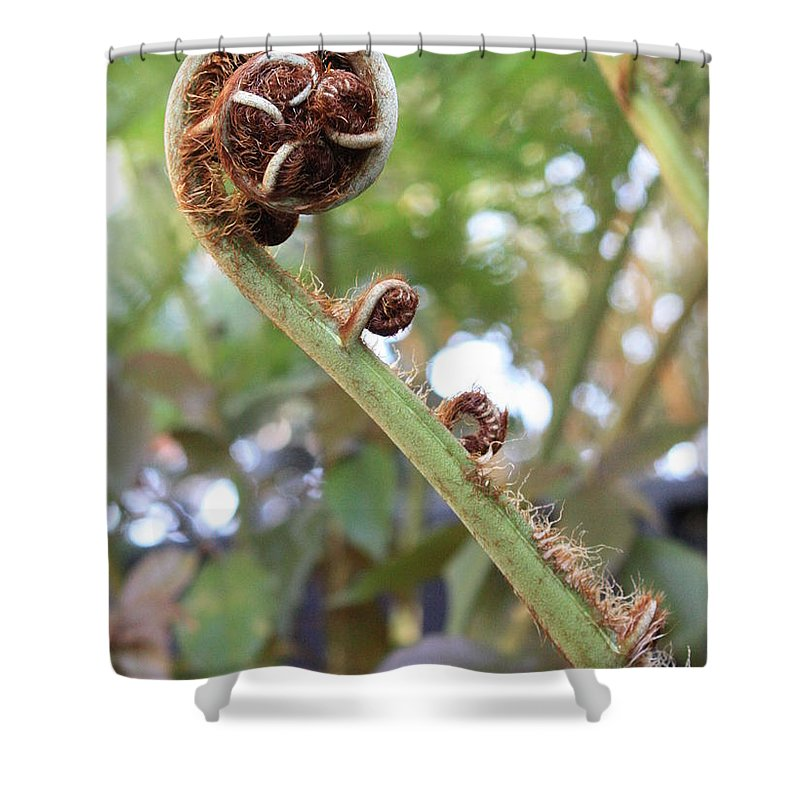 Nature Shower Curtain featuring the photograph Unfurling by Carol Groenen
