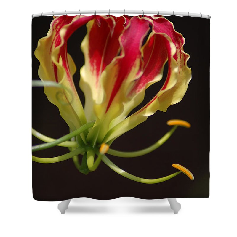 Flowers Shower Curtain featuring the photograph Unique by Donna Bentley