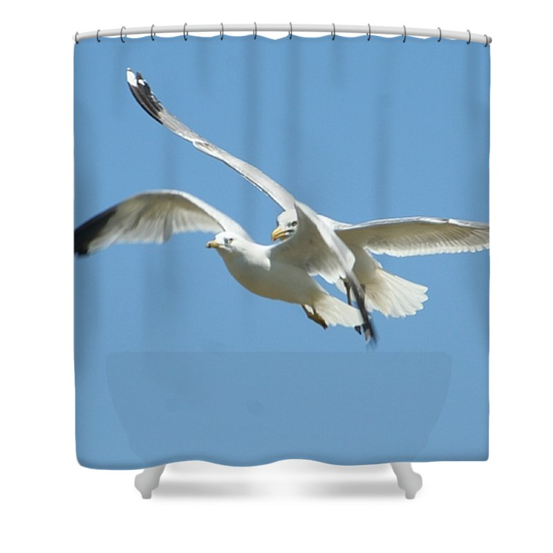 Gift Shower Curtain featuring the photograph United We Fly by Barbara S Nickerson