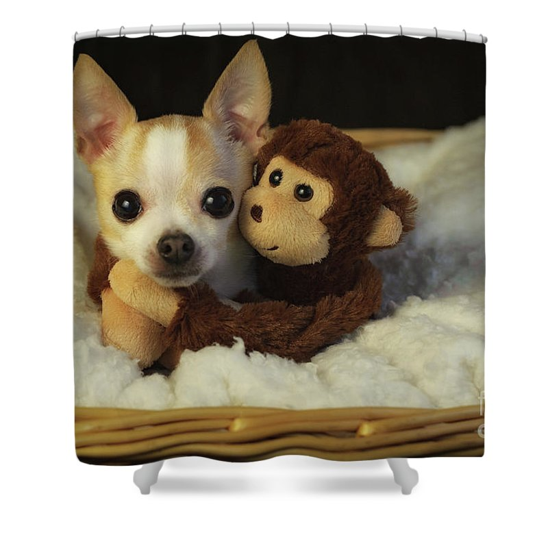 Chihuahua Shower Curtain Featuring The Photograph Unlikely Best Friends