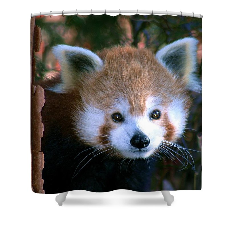 Red Panda Shower Curtain featuring the photograph Unsuspicious by Mitch Cat