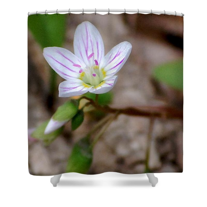 Floral Shower Curtain featuring the photograph Untitiled Floral by David Lane