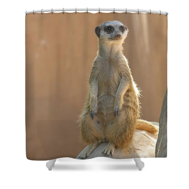 Animails Shower Curtain featuring the photograph Untitled by Diane Greco-Lesser
