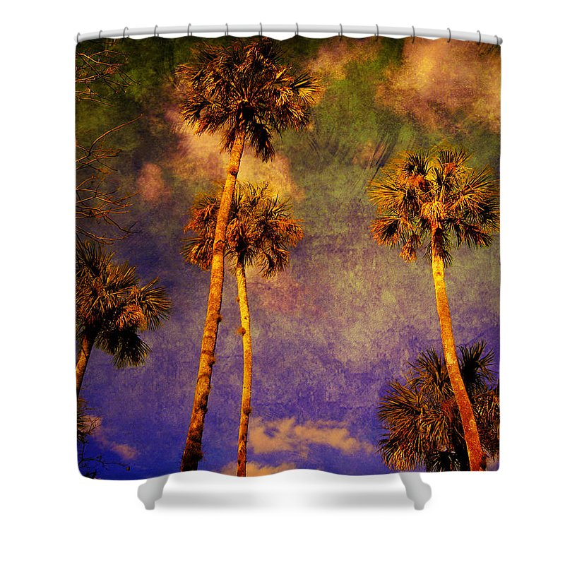 Palm Tree Shower Curtain featuring the photograph Up Up To The Sky by Susanne Van Hulst