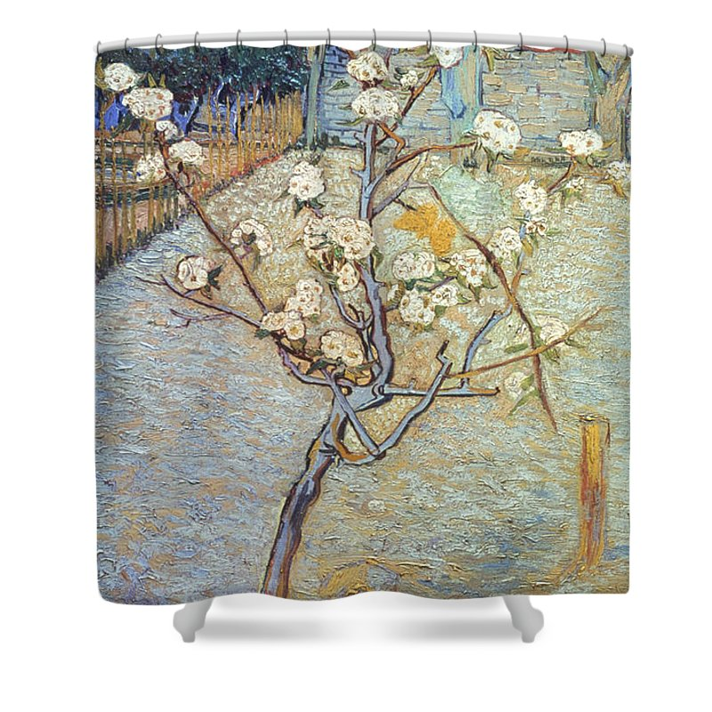1888 Shower Curtain featuring the photograph Van Gogh: Peartree, 1888 by Granger
