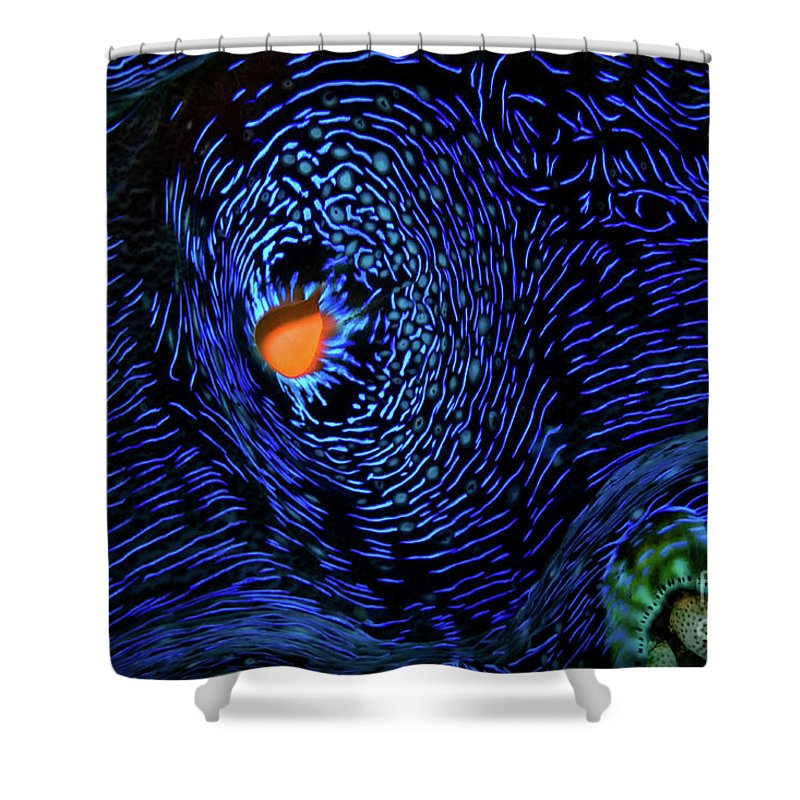 Van Gogh's Clam Shower Curtain featuring the photograph Van Gogh's Clam by Doug Sturgess