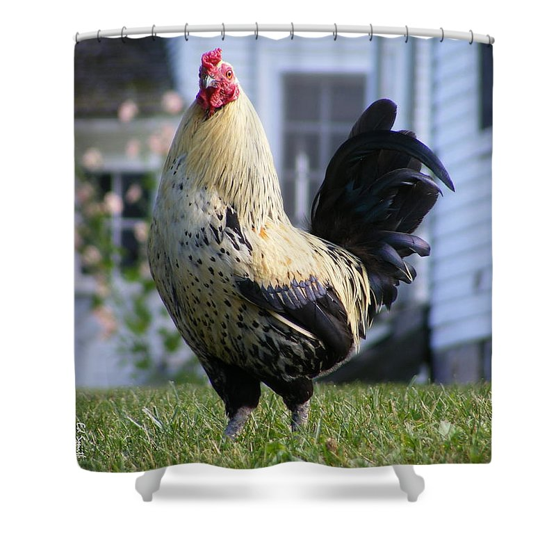 Vanity Shower Curtain featuring the photograph Vanity by Edward Smith
