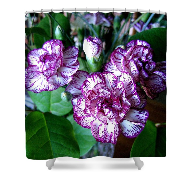 Carnations Shower Curtain featuring the photograph Variegated Carnations by Will Borden