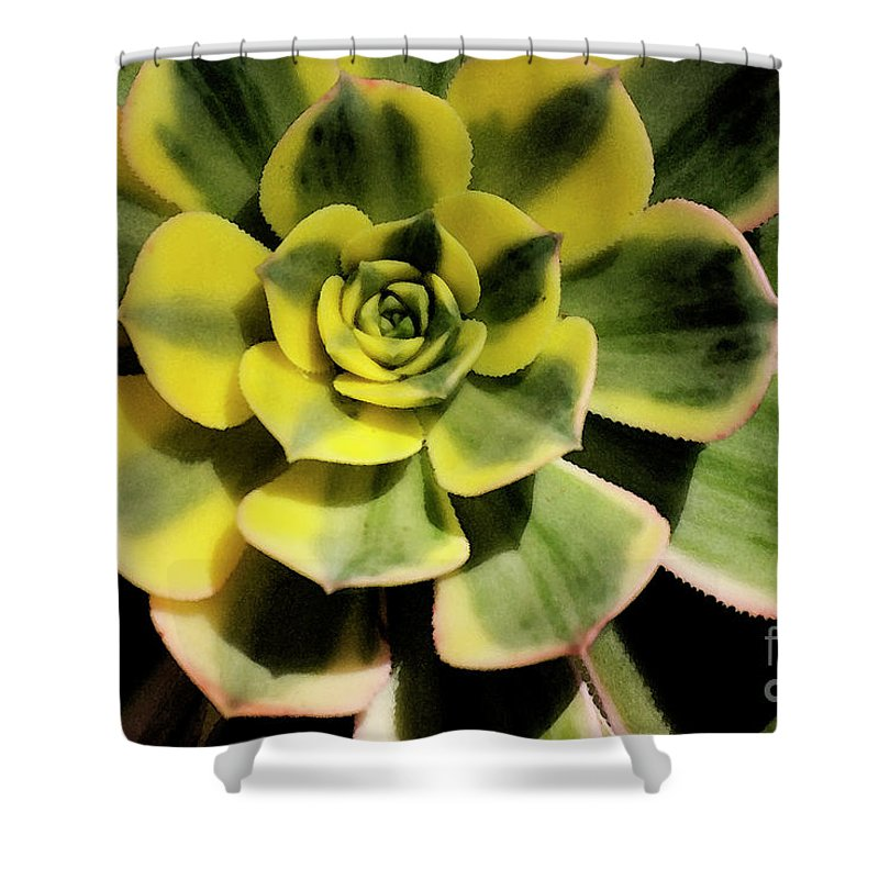 Variegated Shower Curtain featuring the photograph Variegated Succulent by Jim And Emily Bush