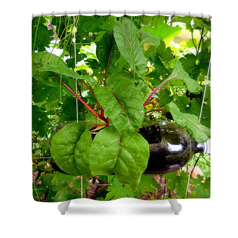 Vegetable Growing In Used Water Bottle Shower Curtain featuring the painting Vegetable Growing In Used Water Bottle 10 by Jeelan Clark