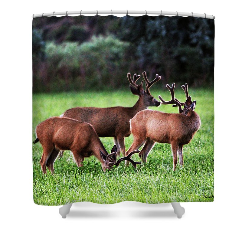 Wildlife Shower Curtain featuring the photograph Velvet Antlers In The Sunset by Dale E Jackson