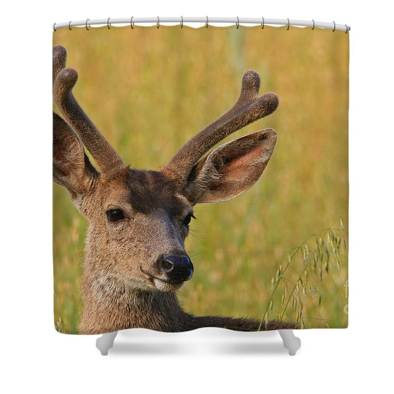 Mule Shower Curtain featuring the photograph Velvet by Craig Corwin